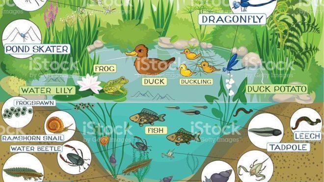 Réinterroger les fonctions support à l'échelle des écosystèmes